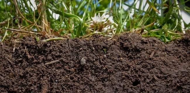 Почва для Форзиции
