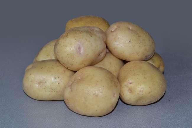 Сорт картошки невский