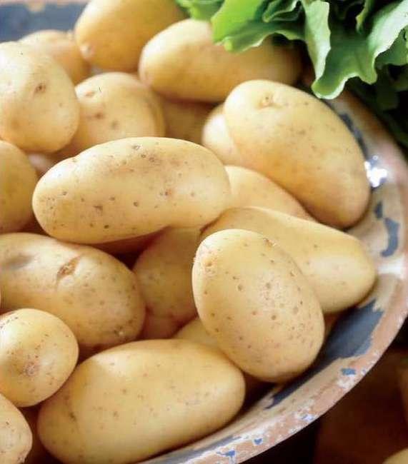 Ультраранний картофель Коломбо